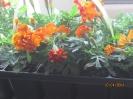 Blumenexperiment_2