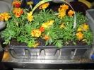 Blumenexperiment_4